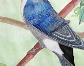 Tree Swallow - Print