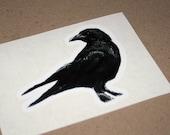 Black Crow photo vinyl sticker