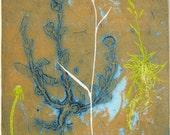 Botanical Collograph mono print. Russet orange & blue.
