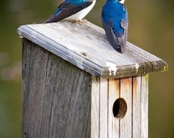 lovers on her birdhouse