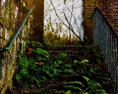 "Growth and Decay fine art print: ""Ferns - Male Ward""  Select-Your-Size"