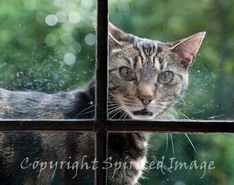 CAT PHOTO - BINKS - Tabby cat, 7.5x5in Print