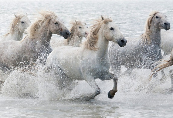 HORSE PHOTO - Camargue Horse, 7.5x5in Print - THUNDER, Wall Decor, Gift, Equine