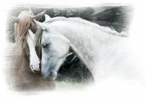"ARABIAN HORSES, ""Gentle"" - Equine Art, Valentine, Horse photography, Atmospheric, Romantic, Love"