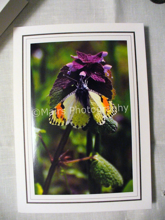Orange White Lacy Yellow Marbled Pacific OrangeTip Butterfly Green Purple Flowers Birthday Mother's Day Photo Greeting Card Blank