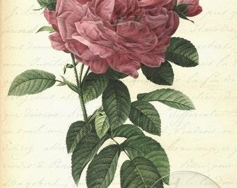 Antique Vintage Pink Roses Digital Collage Art Print 2