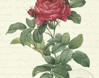 Antique Vintage Red Roses Love Letter Digital Download Art  2