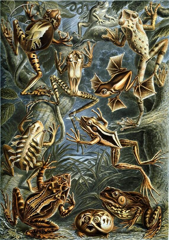Antique Frog Illustration Digital Download Art Print Prehistoric Natural History Childrens Decor