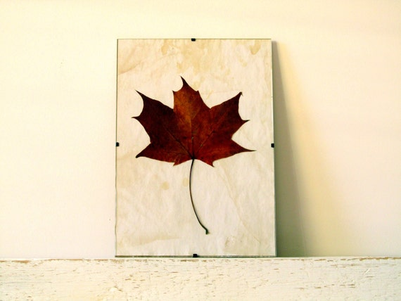 Pressed Leaf - Maple Leaf in Frame (2)
