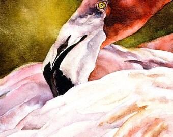 Bird Greeting Card - Flamingo - Greeting Card - Blank Inside