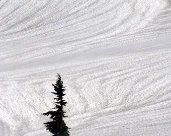 Winter, Tree, Subalpine Fir, North Cascades National Park, WA