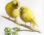 Yellow canary bird painting 5X7 prints from original watercolor painting pet birds home and garden birds earthspalette - Earthspalette