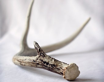 Antler - Original Fine Art Photograph - Gift for Him, Minimal, Square, Rustic Decor, FREE SHIPPING