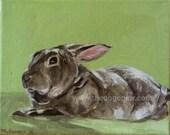 CUSTOM Pet Portrait Oil Painting 8x10 commissioned Bunny Rabbit