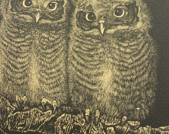 Vintage Rustic Young Screech Owls Lithographic Reproduction Scratchboard Drawing Mel Dobson 1972