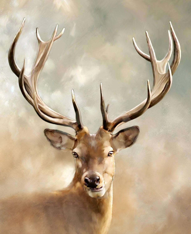 Giclee Print Photograph Animal Photography Deer Photograph