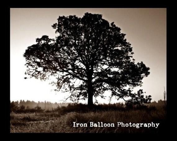 Rise and Shine Tree