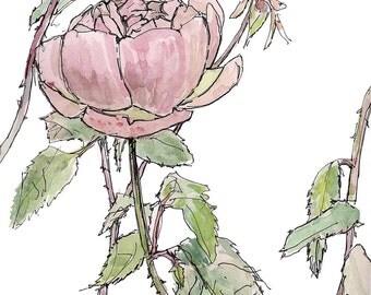 Pink rose watercolor painting, wall decor children's room,digital fine art print, garden illustration, gift for her, Home & Living 8.5x11 .