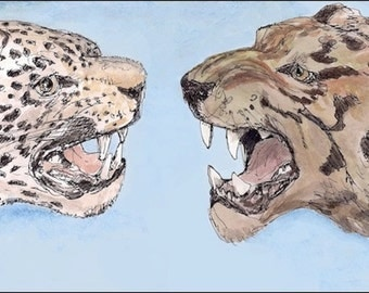 Jaguar versus Tiger, wall art decor room decor archival print signed giclee animal art print, Naturalist &8.5x11 black brown orange stripes