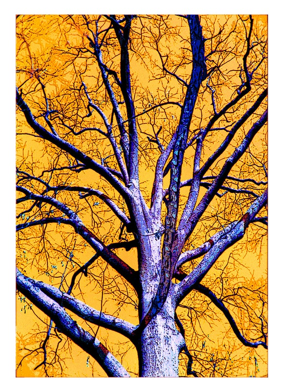 Tree Art Card Greeting - Surreal Abstract Stationary - Glossy Photo paper on Textured card -  Nature Specialty