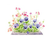 Pansies Watercolor Painting, Pansy Painting, Pansy Watercolor, Spring, Summer, Garden, Purple Blue Flowers, Pansy Print