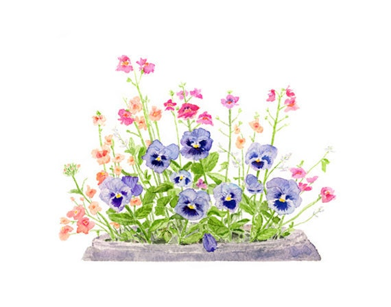 Items similar to pansies watercolor painting pansy for Spring flowers watercolor
