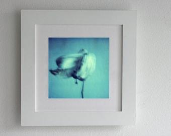 Polaroid Flower, Blue Flower, Fine Art Photography, Botanical Art