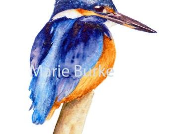 Small Kingfisher - fine art print, watercolor bird print, bird print, bird painting, kingfisher painting, watercolour, wildlife watercolour