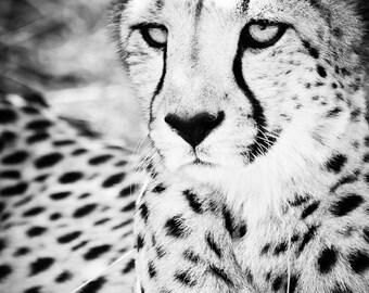 Cheetah Fine Art Photography - Wildlife Wall Art  - Contemporary Animal Black and White Photo - Monochrome Home Decor Print