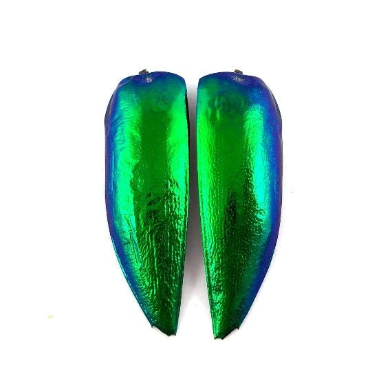 SALE - 2pcs Jewel Beetle Elyctra Wings, Jewelry Supply, Sternocera - 30%