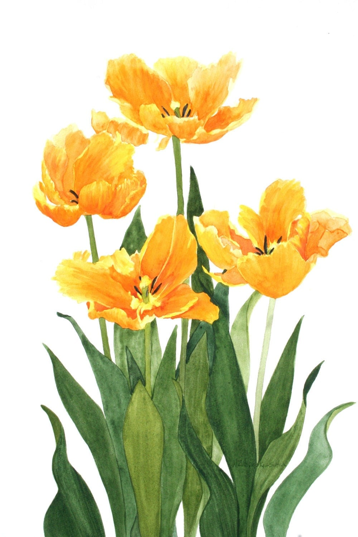 Orange Parrot Tulips Original Watercolor Reproduction