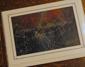 Spider Web with Dew Fall Color, Original Photograph, Photo Card, Blank Card, All Occasion Card