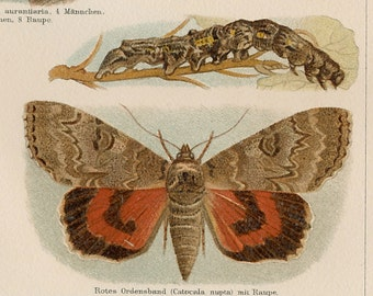 Butterfly print  moth print  cycle of life print entomology print : Antique 1890s chromolithograph / color print original old book plate