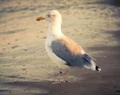 Original Art Print, Seagull Ocean Bird, Yellow Warm Beach, 8x10 or 8x12, Summer Photography