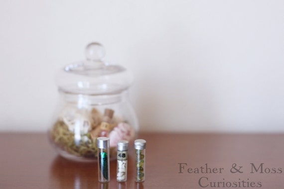 25% off:  Vintage vials containing a beetle wing, crinoid fossils, and peridot.