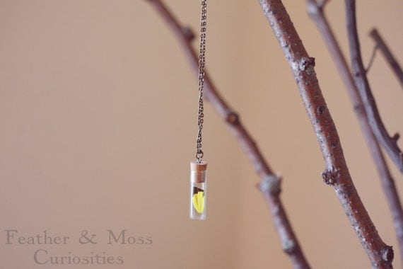 RESERVED Lepidoptera Necklace Number 002. Yellow and black butterfly wing in vintage vial.