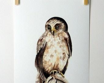 Ruru - a native New Zealand owl giclee print