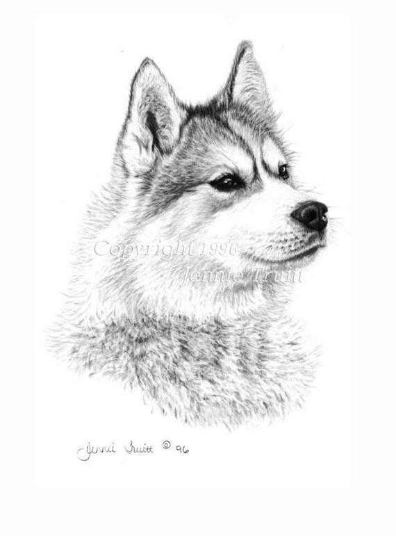 11 x 14 Siberian Husky Art Print