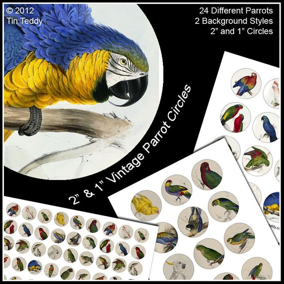 "Parrot Collage Sheets - 2"" and 1"" Digital Printable Tropical Bird Images for Cupcake Toppers Jewelry and other Crafts"