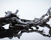 DRIFTWOOD reflections, nature photograhy print