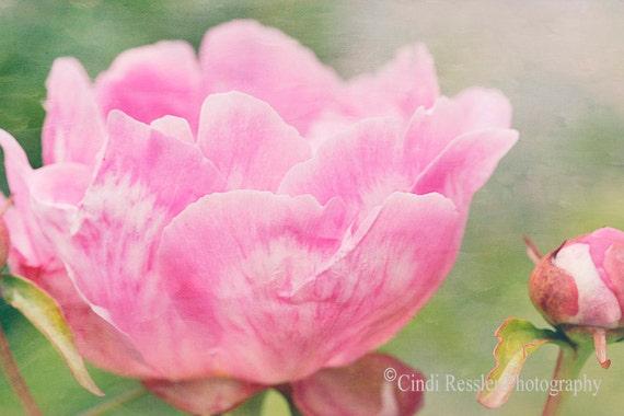 Peony 4, Fine Art Photography, Flower Photography, Floral Photography, Botanical Photography