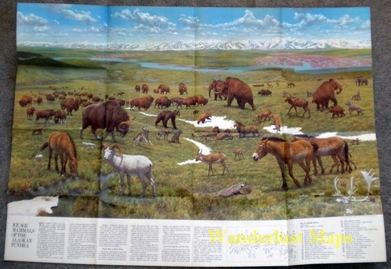 Ice Age Mammals of Alaskan Tundra Vintage Poster by National Geographic - Map of Canada on Reverse Side 1972