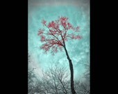Teal and Red Landscape Tree Photograph 8x12 or 8x10, Forest - Lone Tree Wall Art Color Print