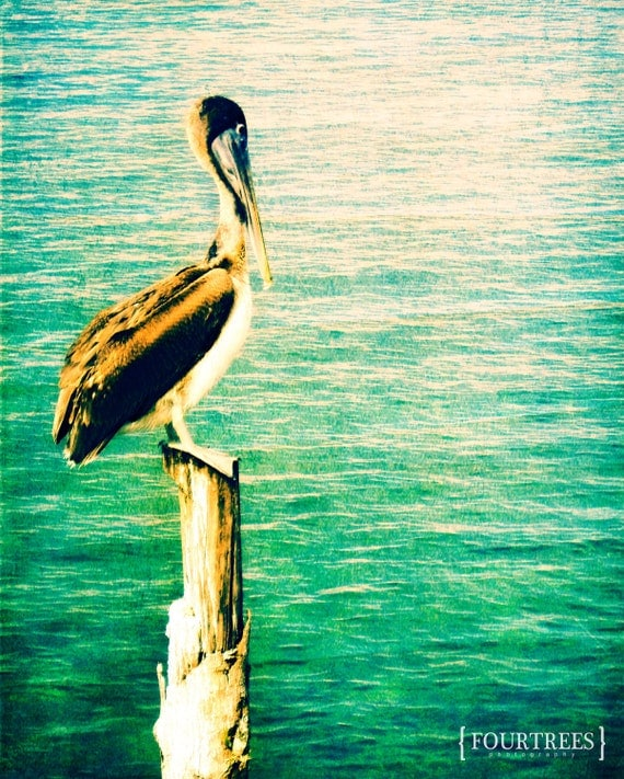 A Higher Place - 8x10 Bird pelican nature photography print ocean sea wall art vacation home decor beach sun turquoise water glare tropical