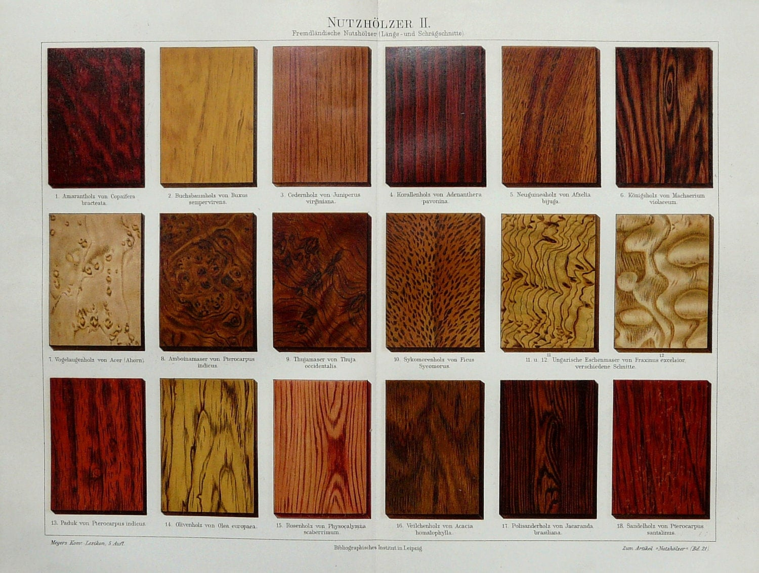 1894 Antique Fine Lithograph Of Wood Types Includes Rosewood