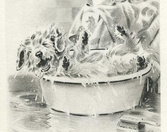 Cute SEALYHAM Art Print Taking a BATH Home Decor 1940s Dog  Print Morgan Dennis Art Print 1417