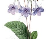 BLUE BELLS Instant Download large Digital Image in color, Digital Collage Sheet, vintage flowers REDOUTE illustration 014