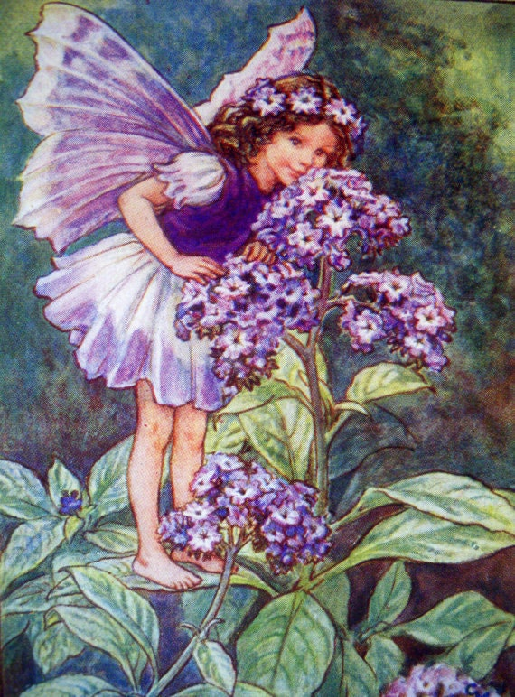 Heliotrope Flower Fairy 1930s The Heliotrope Fairy