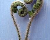 earths heart