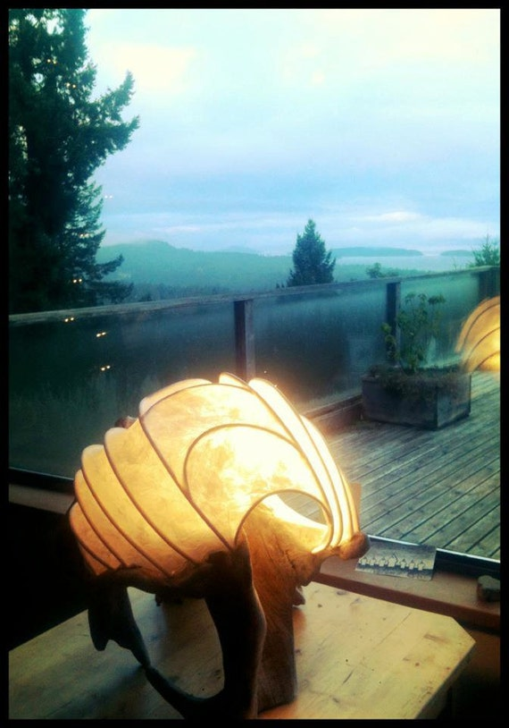 Shelly: Elegant and Rustic Lightsculpture with Driftwood base